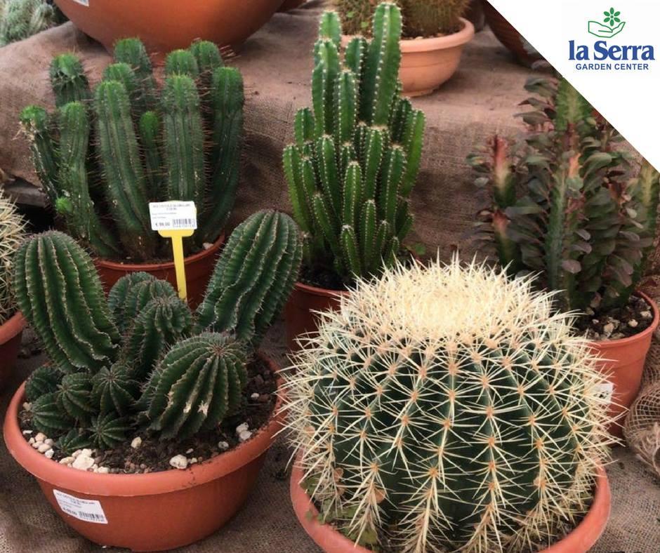 Piante grasse la serra for Serra piante grasse